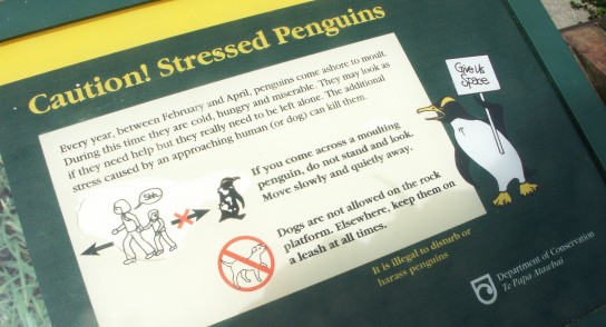 Stressed penguins