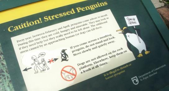 Stressed penguins